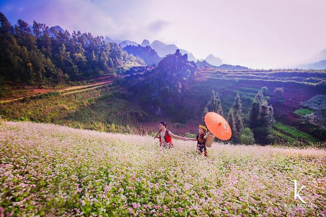 Sắc tím mênh mông của cánh đồng hoa Tam giác mạch nổi tiếng của Hà Giang.