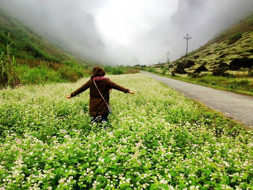 Vẻ đẹp lãng mạn của con đường phủ hoa tam giác mạch.
