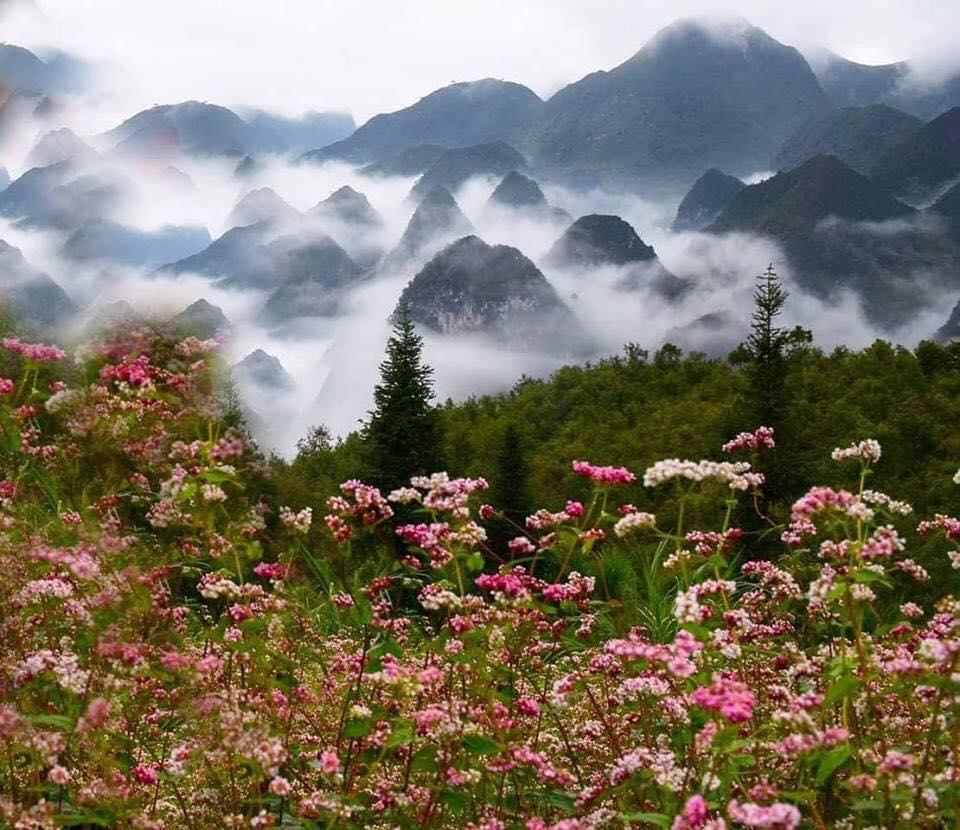 Cánh đồng hoa Tam Giác Mạch giữa núi non hùng vĩ.