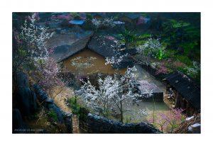 Đẹp mê mẩn mùa hoa đào ở Hà Giang Ảnh: NAG Vũ Anh Dũng